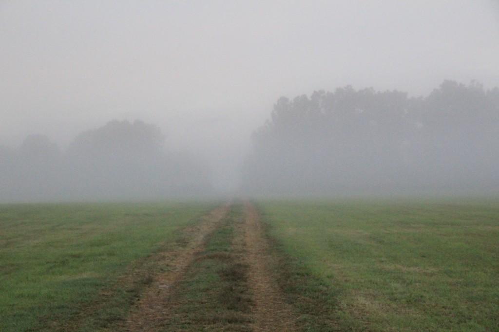 morningRoad1