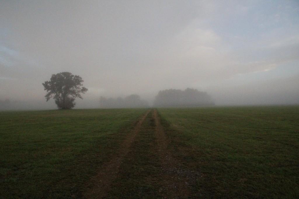 morningRoad2