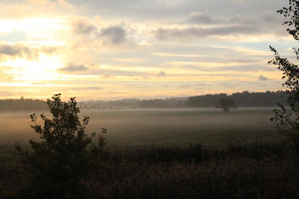 morningfog2