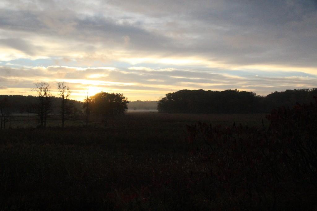 morningfog6