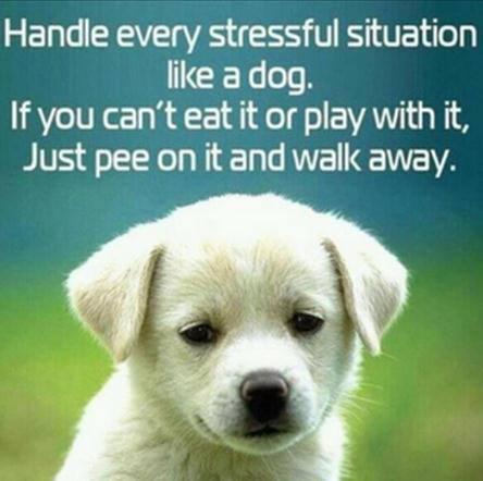 puppyStress